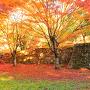 紅葉と八幡曲輪石垣