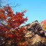新櫓の石垣と紅葉