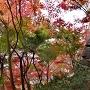石垣と紅葉