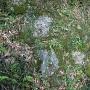 埋もれていた石垣