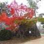 二の丸虎口の紅葉