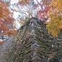 積み直した石垣と紅葉