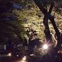 三の丸跡上段に行く途中のライトアップされた木