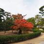 披雲閣庭園紅葉