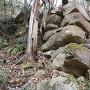 頂上直下南側斜面の石垣