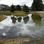 池泉庭園の北側から
