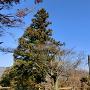 城碑周囲と青空