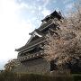 桜満開の熊本城天守閣