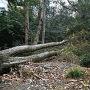 倒木が侵入を遮る。