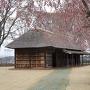 桜満開の根城中館
