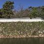 袖池の石垣