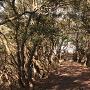 天ヶ岳砦通路
