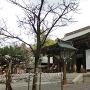 菊池神社(城址跡)