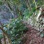 御主殿跡西側の現存石垣
