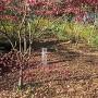 奥沢城跡石碑