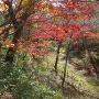 本丸内堀の紅葉