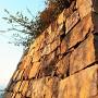 刻印と石垣(資料館南)