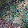 石垣◆登城路