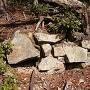 倒木に潰された石垣
