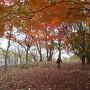本丸付近の紅葉