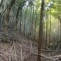 空堀。竹が多過ぎる。