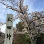 桜を求めて再来