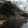 桜堀と本丸石垣