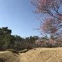北側の空堀と梅