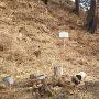 本丸跡の切岸に立っている説明板と秋葉神社への案内板(写真右)