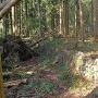 倒木の山林の中に