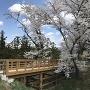 本郭にかかる橋と桜
