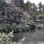 本丸南側の堀跡(池)
