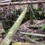 登城口横にある井戸跡
