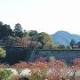 紅葉越しの石垣と大書院[提供:篠山市]