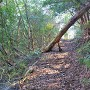 第Ⅲ郭へ向かう林道