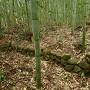 石積(火薬庫付近)