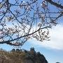 桜の下に天守閣