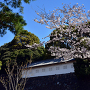 桜と富士見多聞