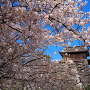 桜と祈念櫓