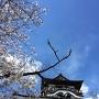 桜越しの天守閣