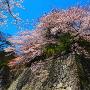 桜咲く巽櫓跡