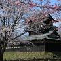 紅白桜に霞む二階櫓