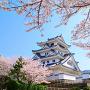桜、模擬天守に向かって