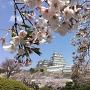 三の丸高台より桜と天守