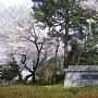 桜の古城公園は、凄いステキですv(・∀・*)