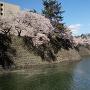 桜満開の石垣