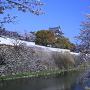 石垣と堀と桜