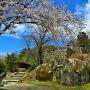 大矢倉石垣と桜