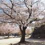 春の城址公園