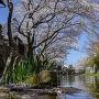 八幡堀 春風景